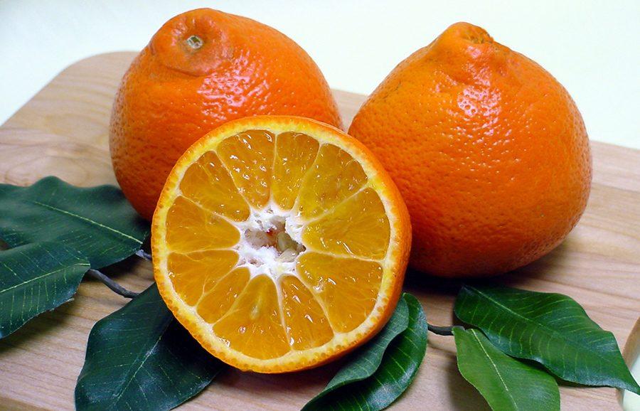 ANFIC-mandarin-SugarBelle-3_LB8-9-fruit-tree