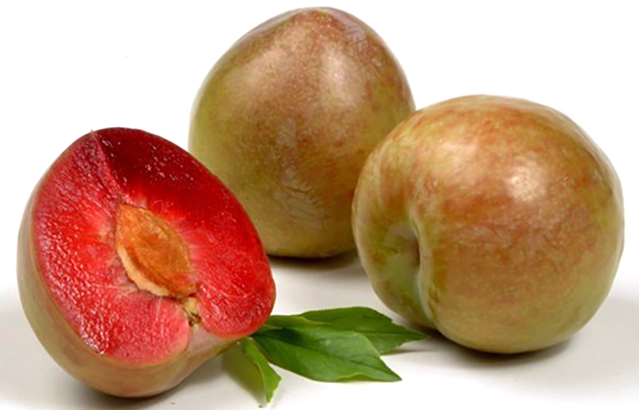 Damask-plum-fruit-tree-variety-anfic