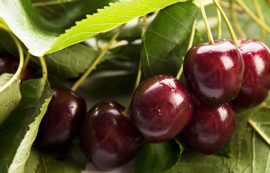 Jacinta-cherry-variety