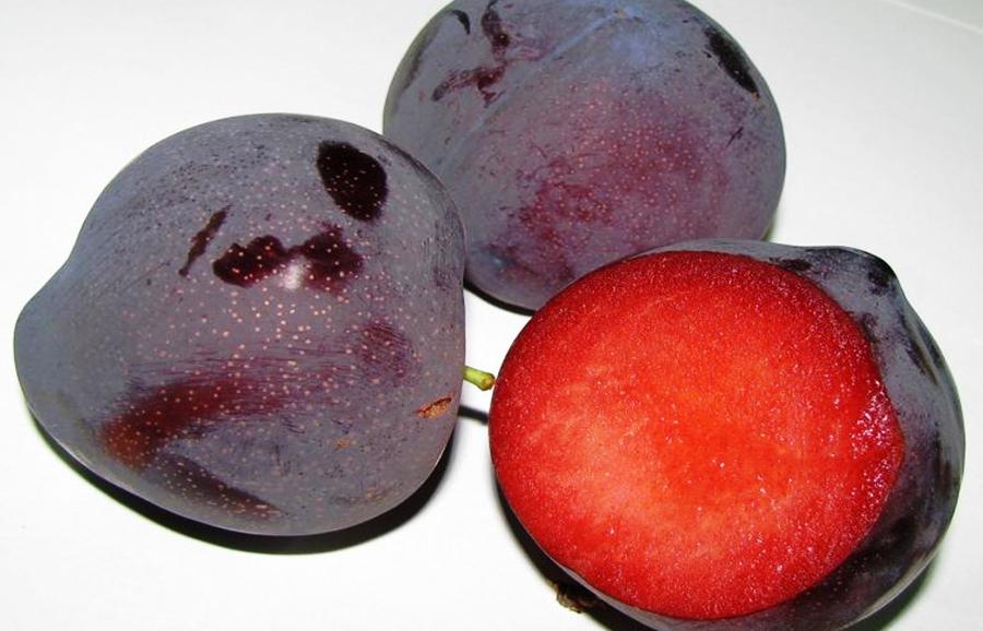Madlen-plum-fruit-tree-variety-anfic