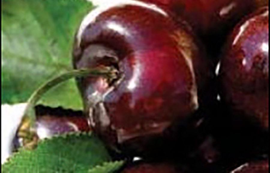 skeena-cherry-fruit-tree-variety-anfic