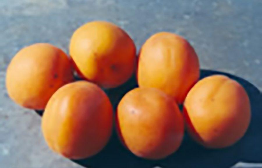 solar_blaze-was-flair-apricot-fruit-tree