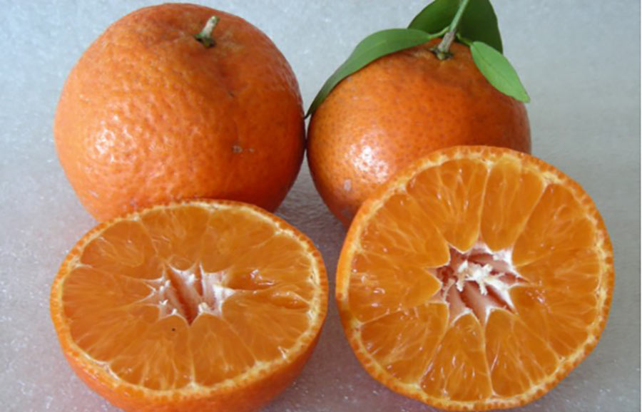 UF 950 (Easy peel) Mandarin fruit-tree-variety